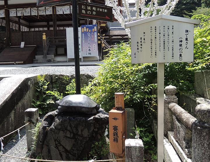 松尾大社の亀