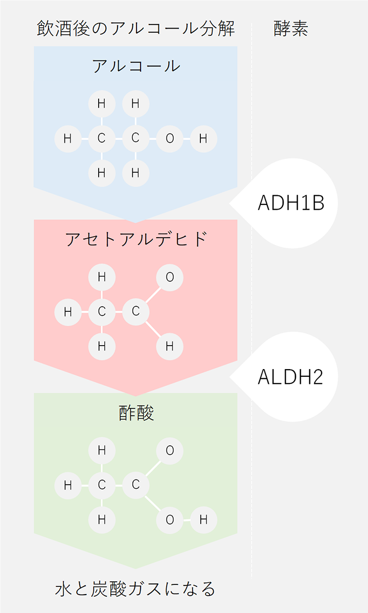 アルコールの分解図