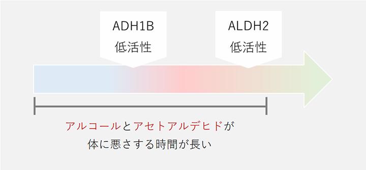 ADH1Bが高活性でALDH2が低活性