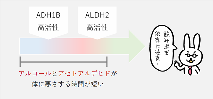 ADH1Bが低活性でALDH2が高活性