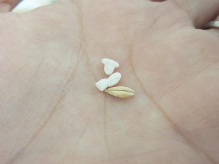 麦芽と麹米